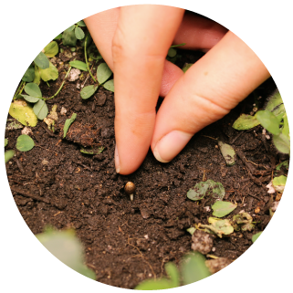 HiBuddy Seeding